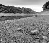 California Drought Threatens 1 Billion Trees