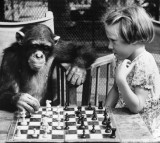 A young girl from Brighton plays a game of chess with Fifi the chimpanzee at London Zoo.