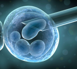 3-Person Embryo