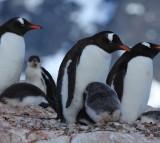 Food Source Blocked by Iceberg, Kills 150,000 Penguins