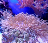 Coral Reef Growth Declining Due to Environmental Changes