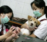 Pampered Pooches In Beijing Pet Beauty Parlour