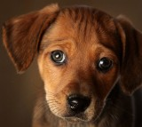 Animal Rescue Centres Feel The Strain After Christmas Pets Are Abandoned