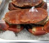 Domoic acid toxic shellfish