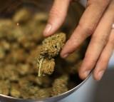 Florida DOH Moves Forward With Marijuana Rules