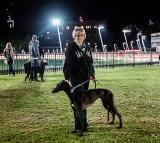 Alabama Rot, Flesh-eating Disease Can Kill Dogs
