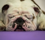 Gene Therapy Cures Rare Disorder Affecting Dogs; Could Cure For Humans Be Next?