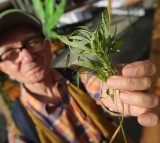 Senior Citizens To Have Daily Dose Of Cannabis During Retirement