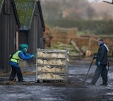 France Will Slaughter More Ducks Due To Bird Flu