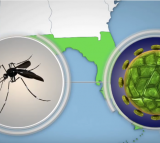 DNA Vaccine Offers Hope For End Of Zika Virus