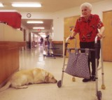 Senior Citizens and Pets Work Together at New Mark Care Center