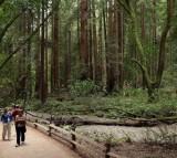 Sequoias And Coastal Redwoods Appear To Flourish Despite Climate Change