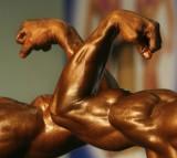 muscle, bodybuilding, men, masculinity