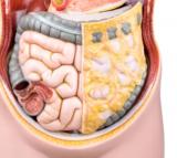 Gluten-Celiac Disease