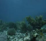 Coral reefs extinction