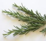 rosemary, herb, memory