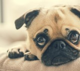 How to Give Your Dog the Care They Deserve