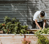 Vegetable Gardening Know-how: A Basic Guide for Neophyte Gardeners