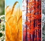 Yuga Seasons