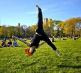 park, central park, green spaces, lawn
