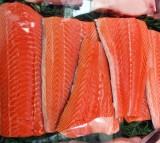 FDA Approves GMO Salmon