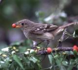 bird, seed