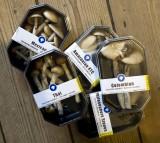 mushroom, shroom, magic, drug