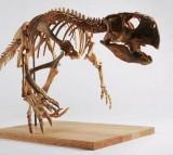 Psittacosaurus, Dinosaur