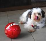 dog, ball