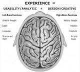 Brain, hemispheres