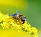 bee, flower, pollination
