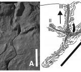 Oldest Bird Footprints Discovered