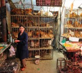 Poultry Market, Chicken, flu
