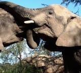 elephant, animal, comfort