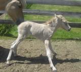 horse, pony