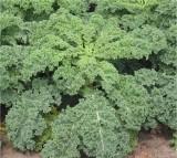 Leafy greens, veggetables
