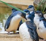penguins, bird