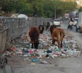 India, street