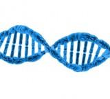 Parents Experiences Could Impact Children's Genes