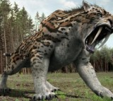 Smilodon, sabre-toothed cat lived in South and North America