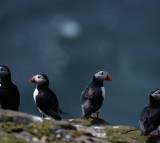 Puffins and Turtle Doves on the Verge of Extinction