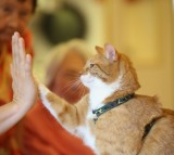 Mogli lifts a paw to touch the palm of his owner Eva Kullmann