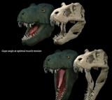 Life reconstruction and skull model of Tyrannosaurus rex
