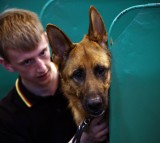 A young man sits with his German Shepherd on the first day of Crufts dog show at the National Exhibition Centre on March 5, 2015 in Birmingham, England.