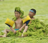 Children play at a beach covered by a thick layer of green algae on July 20, 2015 in Qingdao, China.