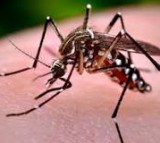 Mexico First in World to Approve Dengue Fever Vaccine