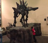 Evolution of Dinosaurs Happened at Rapid Pace, Say Scientists