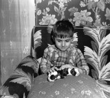 A young boy in bed with a couple of Boston terrier puppies.
