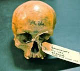 Scientists have sequenced the first ancient Irish human genome of a woman.